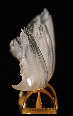 Zahnarzt Hamm 002